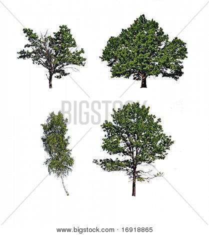 tree insulated on white background