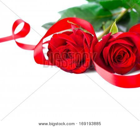 Valentine. Valentines Rose Flower with Ribbon isolated on white Background. Red Valentine's Day Border Art Design with couple of beautiful roses