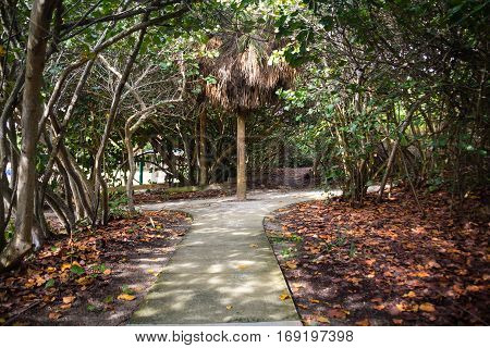 walking trail into tropical climate nature Florida USA