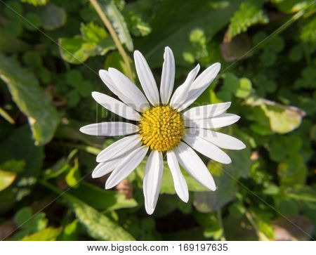 flower daisy white yellow close-up one petal wildlife garden field grass sunny beautiful close-up botany head day summer heat meadow stalk stamen pollen flora bloom natural season spider web object;