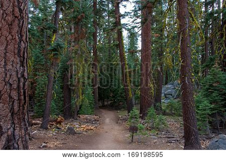Pohono trail in the forest, Yosemite National Park California USA