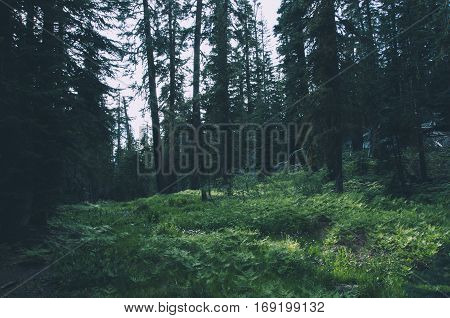 Forest in Yosemite National Park, California, USA