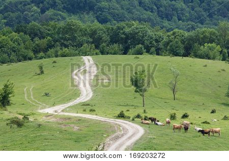landscape cow trampled-down meadow road sunny beautiful