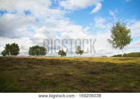 Spring hill with birch tree growing on the background of bright blue sky with the regional party committee