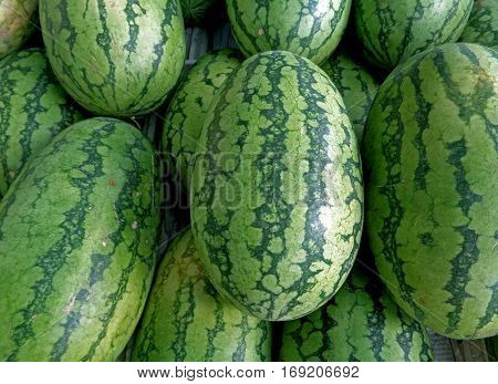 Pile of green with dark green stripes rind oval shape ripe Watermelons