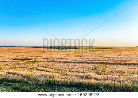 Sunny summer landscape plains of the central zone of Russia. Belgorod region.