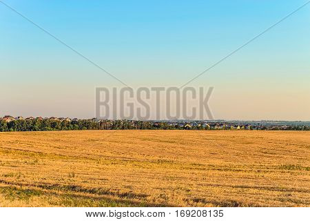 Flat landscape with a rye field and suburban houses on the horizon. Rural landscape. Belgorod region Russia.