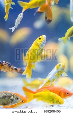 any colorful decorative a fishes in aquarium