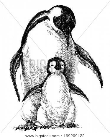 Penguins family. Cute baby penguin and parent drawing isolated