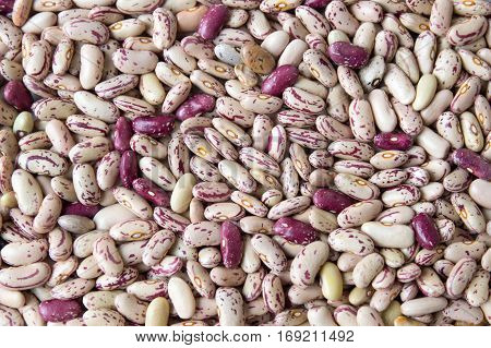Colorful Borlotti beans forming a background pattern