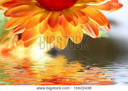 orange flower above the water