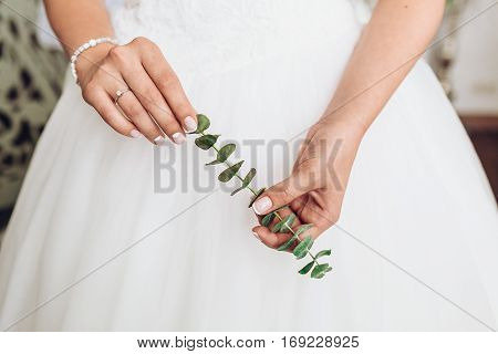 Elegant bride hanging green branch of indoor plant. Tender bridal hands, close-up. Morning bridal preparation. Fine art details.