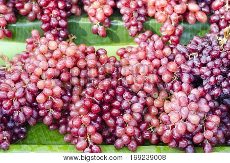 Red wine grapes background/ dark grapes blue grapes Red Grape Vitis vinifera L. VITACEAE Cardinal Grape Emperor Grape