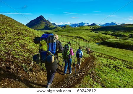hikers on the trail in the Islandic mountains. Trek in National Park Landmannalaugar, Iceland. valley is covered with bright green moss poster