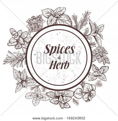 Herbs and spices label. Engraving illustrations for tags. Vector sketches of vegan food. Hand drawn plants.