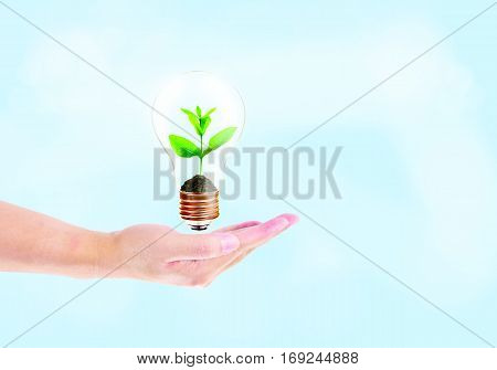 hand hold Light Bulb with soil and green plant sprout inside