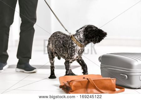 Dog looking for drugs in airport