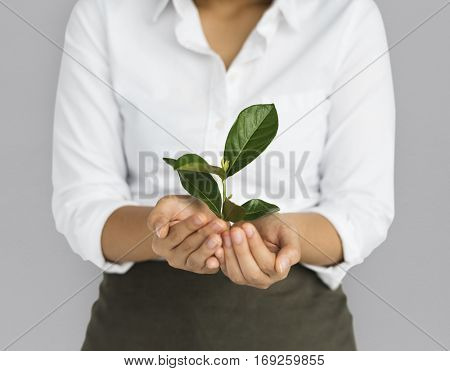 Business Attire Female Holding Seedling