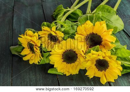 A photo of shiny yellow sunflowers with green leaves on a dark wooden boards texture with copy space