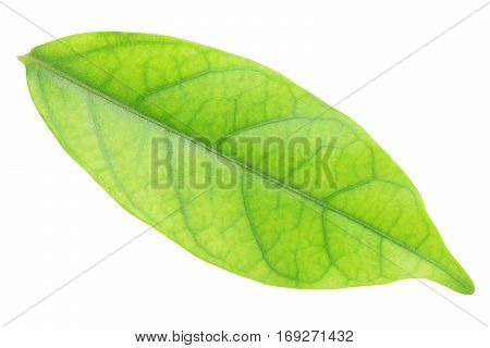 Green leave isolated on white with clipping path