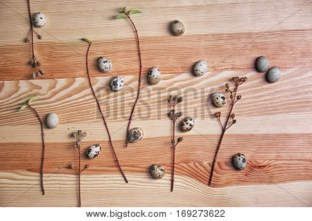 Composition of quail eggs and tree branches on wooden background