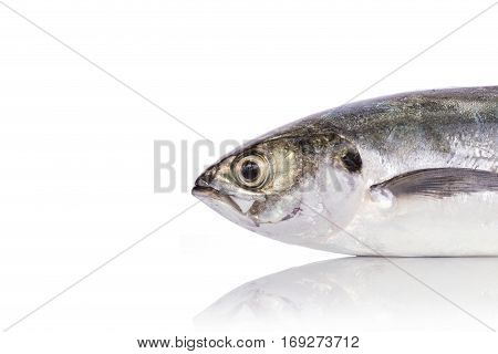 Fresh Fish (torpedo Scad). Studio Shot Isolated On White