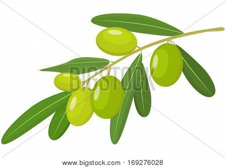 Vector Green Olives Branch with Leaves Isolated on White Background. Label of green olives with realistic olive branch. Vector illustration. Healthy vegetables and vegetarian food. Fresh organic food healthy eating .