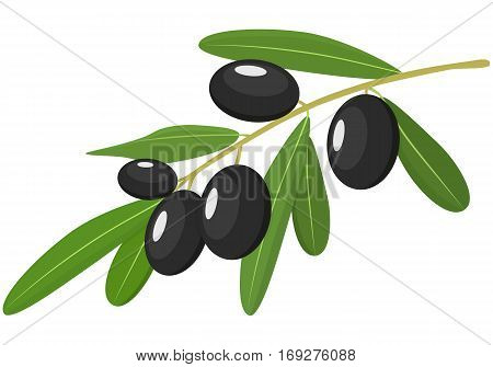 Vector black Olives Branch with Leaves Isolated on White Background. Label of black olives with realistic olive branch. Vector illustration. Healthy vegetables and vegetarian food. Fresh organic food healthy eating .