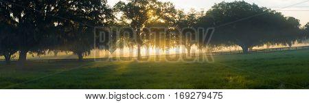 warm glowing sunrise sun rays through live oaks pasture scene