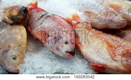 Fresh fish on ice at market. Freezing and raw food. Frozen fresh fish background.