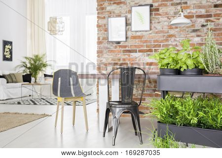 Modern Apartment With Herbs Cart