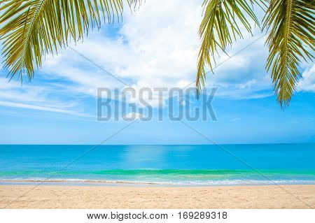 summer beach with palm trees and blue sky