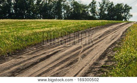 dirt road in the field rural landscape