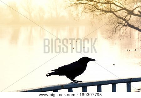 Fog over a lake with swimming ducks and raven in the foreground. Tranquil scene at sunset or sunrise with warm orange sunlight.