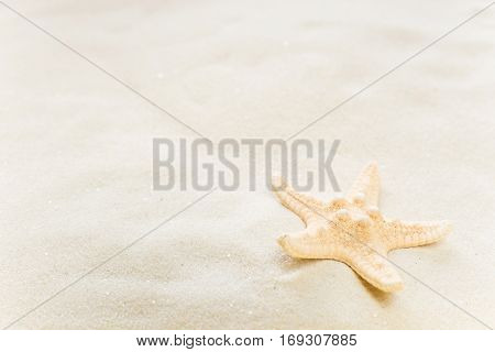 One starfish on the background of white sea sand