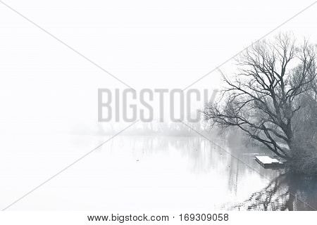 Fog over a lake with bare tree, ducks and water reflection. Tranquil scene.