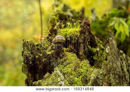 Close up scenic image of stump with moss in the forest