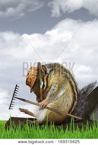 Funny gardener concept  , chipmunk with rake