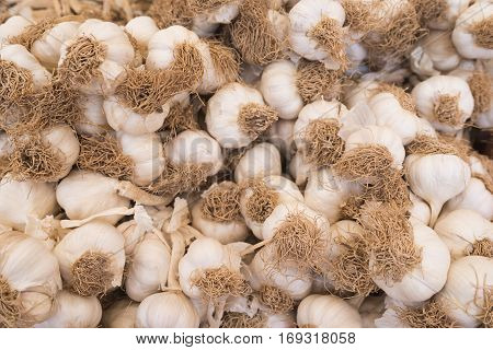 Garlic. Fresh garlic. Garlic harvest. Garlic. Garlic pattern. Garlic texture. Garlic close up. (Selective background)