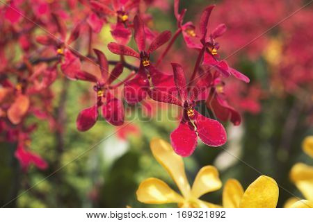 Red Orchids Close Up