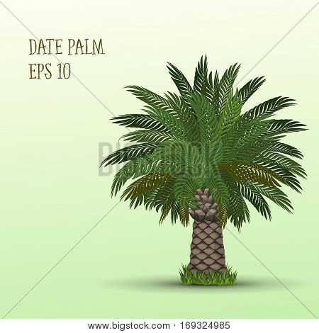 Vector illustration of Date palm tree on light green background