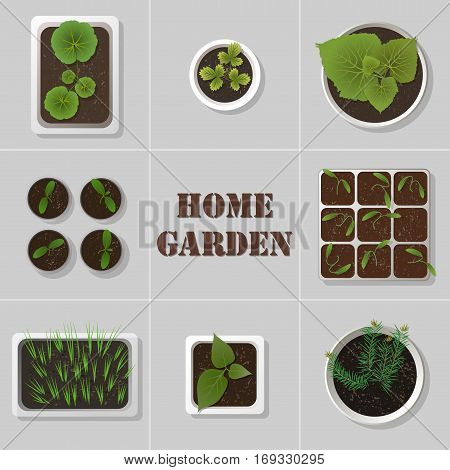 Vector set of flat realistic icons of seedlings garden plants in different pots.