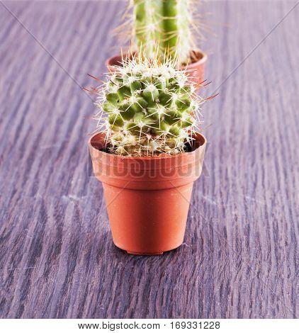Cactus In Close Up