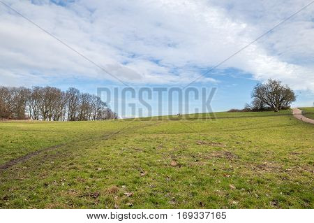 The top of a heath in a British park during winter with just some clouds in the blue sky.