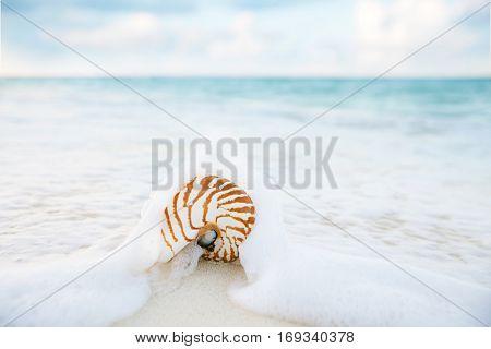 nautilus shell sea waves, live action  shallow dof