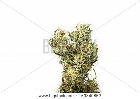 Big dry top bud of female cannabis indica plant cut on white background.