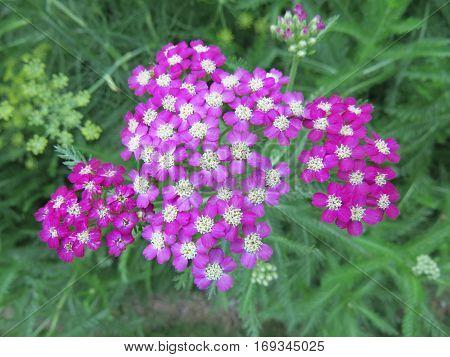 Colorful Grass Flowers Wayside Between Sidewalk Travel
