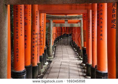 Japan Torii Gates