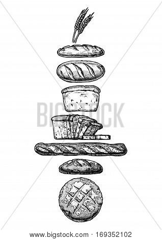 Vector hand drawn illustration of different breads: wheat germ long loaf pan loaf (sliced) baguette and boule. Black and white isolated on white.