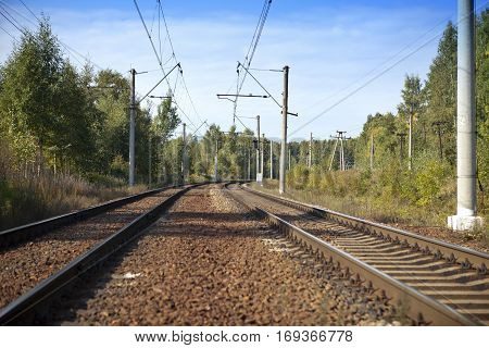 Railway tracks in the wood in the summer